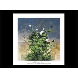 y09399 複製畫 Barbera 笆笆拉-白薔薇 (B1258)---預購商品