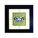 蝴蝶(1)  y03012 玻璃壁飾系列