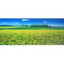 y00016 油畫 風景(P1-2-045)
