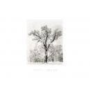 y09432 複製畫 Oak Tree