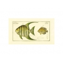 y09410 複製畫 Pen Fish