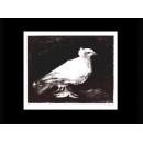 y09424 複製畫 Picasso 畢卡索-鴿子(P348)