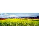 風景鄉村油畫系列 -y12817-油畫- 風景鄉村油畫系列 (另有其他尺寸)