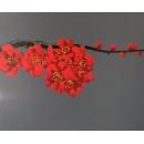y14025 畫作系列-油畫- 油畫花系列- 櫻花(紅色)