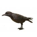 烏鴉A(y14689 銅雕系列- 銅雕大型擺飾、銅雕動物 )