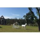 南瓜馬車- y15462- 傢俱系列-鐵材藝術 / 不含立體雕塑馬 與 花藝設計的價格