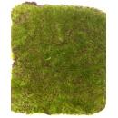 y13705 庭園造景-人工草皮- 綠青苔草皮(方形)