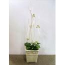 y13839 花藝設計 茶几用直立式花藝作品  造型花藝
