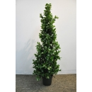 y13855 花藝設計.花材果樹- 人造樹- 五尺修剪型月桂樹