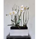 y14412 花藝設計- 玄關桌.電視櫃盆花- 蝴蝶蘭造型花藝