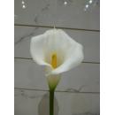 白色中號馬蹢蓮-海芋(y14665  花藝設計 花材材料 精緻人造花 枝花 海芋.火鶴)