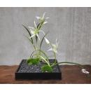 日式禪風花藝_黑色正方形花器白蘭花立綠苔劍葉(y14671 花藝設計- 玄關桌.電視櫃盆花 - 造型花藝設計)