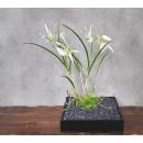 日式禪風花藝_黑色正方形花器綠苔托白蘭花(y14672 花藝設計- 玄關桌.電視櫃盆花 - 造型花藝設計)