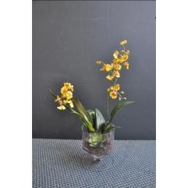 文心蘭y15275-花藝設計.花材果樹