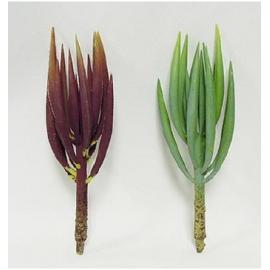 y15882 花藝設計-精緻人造花-多肉植物-藍月亮/2款顏色~紅.綠