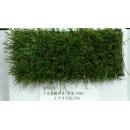 y16036 庭園造景-人工草皮- 3色景觀草皮(ZC9-12)