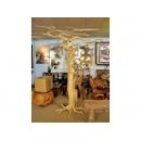 y12550 8尺咖啡樹 38-ACF0901