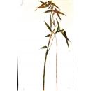 彩竹油畫-y15371-畫作系列