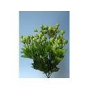 y01473吉利果花束-綠