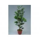 y01492人造樹 - 6尺鴨腳目-綠(含塑膠盆)