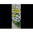 常美水彩畫-4k黃白海芋-(y01940-4D水彩)