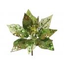 y02141-花材-珠光聖誕紅(綠)