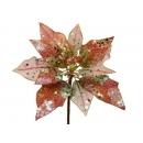 y02142-花材-珠光聖誕紅(橘紅)