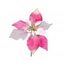 y02166-花材-紋金聖誕花(粉紅)