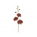 y02301-花材-金典花材-珠光蝴蝶蘭(紅)