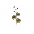 y02302-花材-金典花材-珠光蝴蝶蘭(綠)