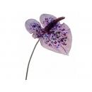 y02308-花材-金典花材-珠光火鶴(紫)