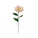 y02322-花材-金典花材-洋玉蘭(粉紅色)