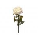 y02327-花材-金典花材-金邊玫瑰(米白)