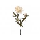 y02331-花材-金典花材-金邊牡丹(米白)