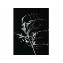 y02371-花材-其他-珠珠花品