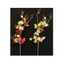 y02375-花材-其他-蝴蝶枝花(單一價格)