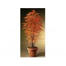 y03401 人造樹- 日本迷你橙楓含盆