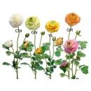 y03719-花材花藝果樹-花材-茶花(白、綠、黃、橘、粉)
