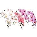 y03721-花材花藝果樹-花材-蝴蝶蘭(白黃、白紅、粉、粉紫、紫黃)