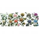 y03722-花材花藝果樹-花材-植栽繡球花