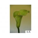 y11002 精緻人造花-海芋.火鶴-特大海芋(綠)