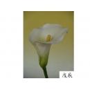 y11003 精緻人造花-海芋.火鶴-特大海芋(米白)