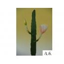 y11006 精緻人造花-仙人掌-大孔雀仙人掌(米白)