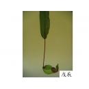 y11008 精緻人造花-草本類-維京豬籠草(綠)