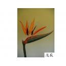 y11012 精緻人造花-特大天堂鳥(橘)