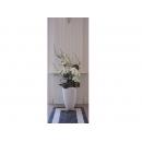 y11039 人造花藝-蘭花樹枝籐球造型花藝 盆花