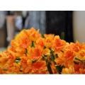 y11316 花藝設計.花材花藝果樹系列-水仙束-桔黃
