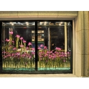 y11333 花藝設計系列-中壢法國之星鳶尾花(愛麗斯)櫥窗佈置案例