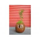 y11667花器系列-木製花器-老柚木花器