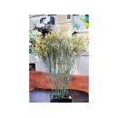 y11722 精緻人造花-天然乾燥花-永生水晶花